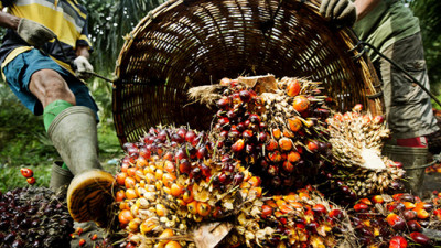 IOI Pledges to Clean Up Supply Chain One Year after RSPO Suspension