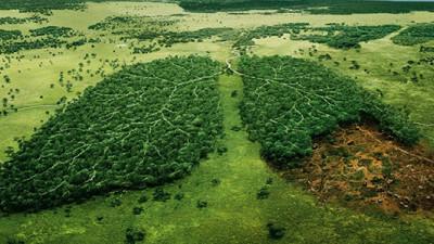 Staring Down Extinction: A Conversation with Elizabeth Kolbert