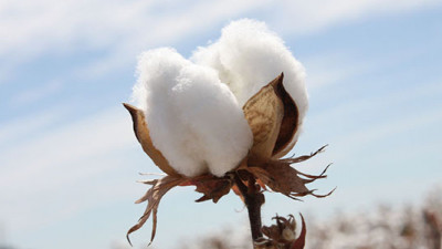 Cotton 2040 Coalition Makes Case for Taking Sustainable Cotton Mainstream