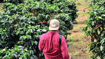 A 100-Year Journey: Achieving Sustainability for All in the Coffee Industry