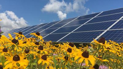 Pollinator-Friendly Solar Arrays in Minnesota Now Commercially Produce Honey