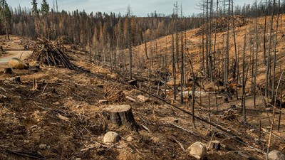 L'Oréal, McDonald's Commit to Nix Deforestation from Commodity Supply Chains