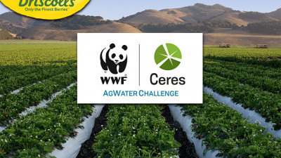 Driscoll's Joins the Ceres-WWF AgWater Challenge