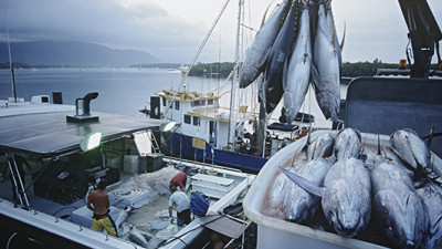 50 Major Companies Band Together to Stomp Out Illegal Tuna, Forced Labor