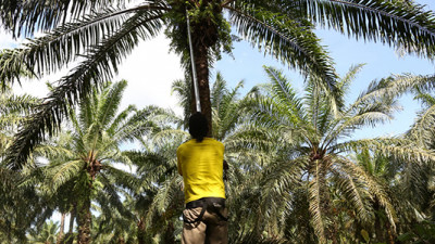 How Cargill, Solidaridad Are Cultivating a Sustainable Palm Oil Industry in Colombia