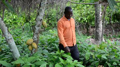 Mondelēz International Revs Up Forest Protection Efforts in Ghana, Côte d'Ivoire
