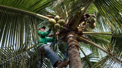 BASF, Cargill, P&G, GIZ Team Up to Transform Coconut Oil Supply Chain