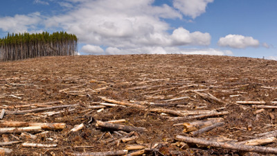 Halting Deforestation: Three Essential Things Your Business Can Do