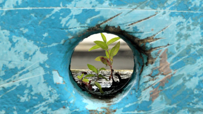 Dispelling 5 Common Myths about Regeneration and Regenerative Business