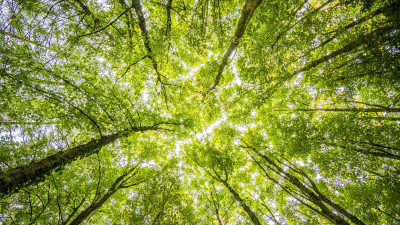 Tetra Pak Scores Double 'A' by CDP for Leading Efforts Against Climate Change and Protecting Forests