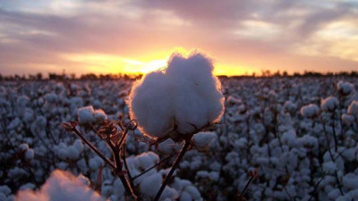 Wrangler Joins Field to Market to Accelerate US Sustainable Cotton