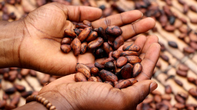 Hershey Using 'Cocoa for Good,' Investing $500M to Support Farming Communities