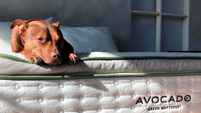 Carbon-Negative Avocado Green Mattress Supports Dreams of Regeneration
