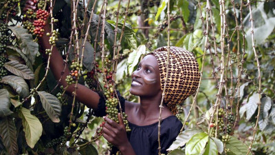 Fairtrade America Calls for Democratization of Data Across Supply Chains