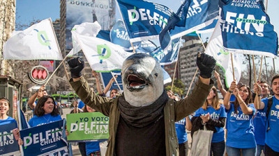 In Chile, a Dolphin Is Running for President to Highlight Need for Strong Climate Leadership