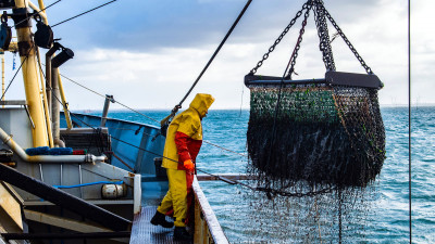 MSC: Progress Has Been Made in Sustainable Fishing, But Change Needs to Happen Faster