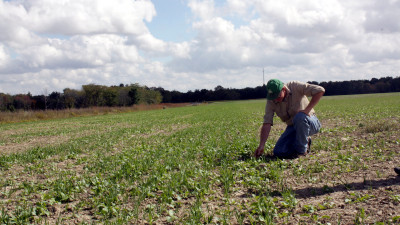 Cover Crops Helped Farmers Thrive During Difficult 2019 Weather