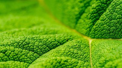 Scalability: Upshifting from Micro- to Macro-Level Sustainability