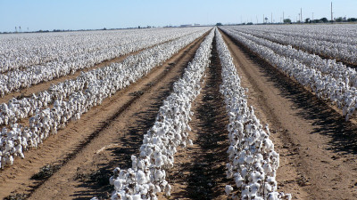 Rising to the Challenge: Meeting the World's Demand for More Cotton While Using Less Land