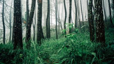 Seeing the Forest for the Trees: Dispelling Sustainable Forestry Misconceptions