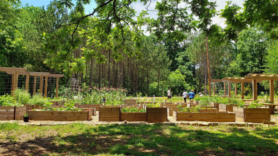 Atlanta's Food Forest Pioneering Potential Solution to Urban Food Deserts