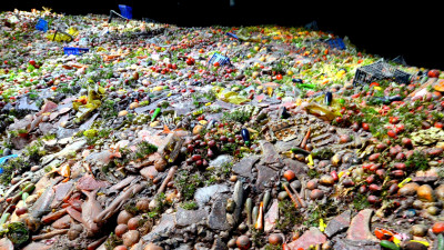 Perspectives from the Food Waste Trenches