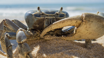 Trending: Mezcal, Crab Shells Fuel Circular Solutions for Food Waste, Pollution, Packaging