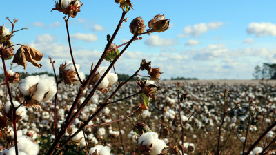 The Root of Sustainability: US Cotton Farmers Dig Deeper in the Name of Healthy Soil