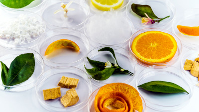 Trending: Could Food Waste Be the Future of Fashion?