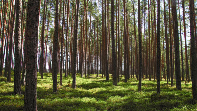 Vertical Supply Group Partners with the Arbor Day Foundation to Further Its Commitment to the Environment
