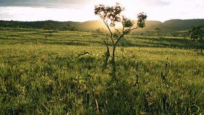 23 Companies Sign Manifesto to Halt Destruction of Brazilian Cerrado