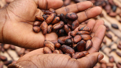 Cocoa Industry, Governments Unveil Frameworks for Action on Deforestation