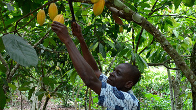Trending: Cocoa Giants Embrace Sustainability, But Consumers Remain Key to Lasting Progress