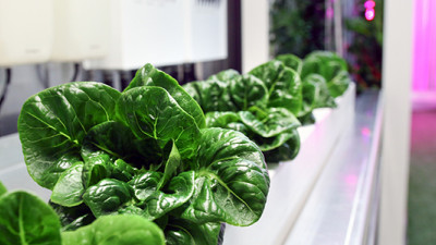 Trending: High-Tech Shipping Crates, Precision Technology Poised to Revolutionize Urban Ag