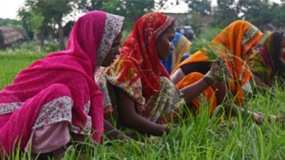 Mars Partnering to Improve Ag Development, Nutrition, Food Safety in India