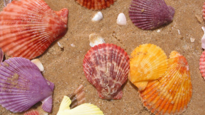 Trending: Bio-Based Materials Breakthroughs Thanks to Seashells, Fructose