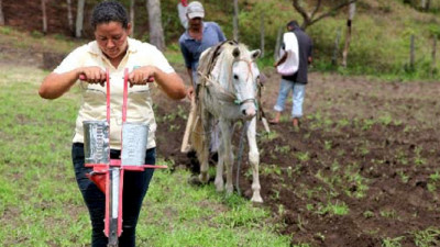 Walmart's Smallholder Food Sourcing in China, Nicaragua Offer Multiple Lessons for Stakeholders