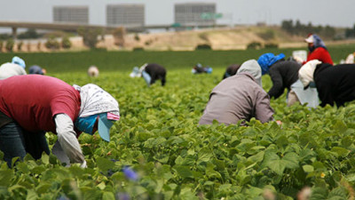 Companies Face 71% Likelihood of Finding Modern Slavery in Supply Chains