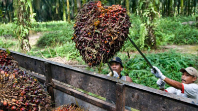 Industry Giant GAR to Fully Trace Its Palm Oil Supply Chain to the Plantation by 2020