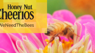 General Mills, NGOs Speak for the Bees: Pollinators Need Help From Companies