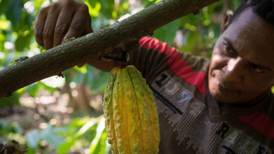 Hershey, Lindt, Mars, Nestlé Join New Program to Help Cocoa Farmers Adapt to Climate Change