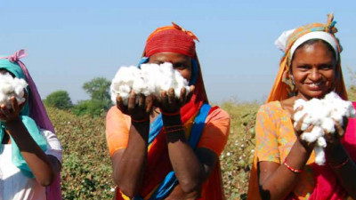 Of Top Cotton Users, Over 75% 'Appear to Do Virtually Nothing' on Cotton Sustainability