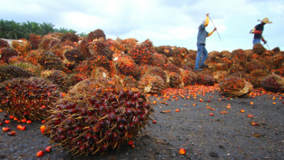 A Busy Week for Palm Oil Sustainability: Indonesia Cops Out, Singapore Steps In