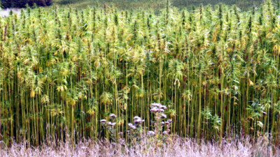 Could Hemp Disrupt the Energy Industry?