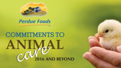Perdue Responds to Abuse Exposé with Groundbreaking Animal Welfare Policy