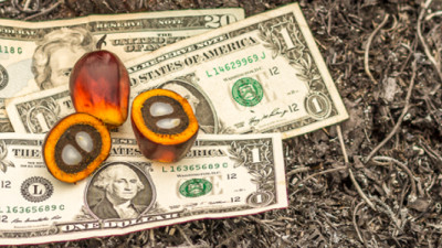 Are Your Retirement Funds Destroying Rainforests? This New Web Tool Can Tell You