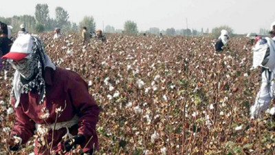 adidas, Woolworths Among Brands Saying YESS to Slavery-Free Cotton