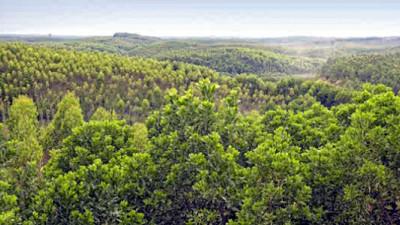 How Forest Restoration Is Turning the Tide on Deforestation