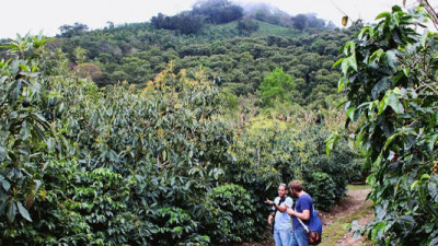 SAN, Rainforest Alliance Update Certification with Focus on Climate-Smart Ag, Curbing Deforestation