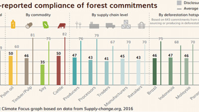 Report: Forest Protection Pledges Have Surged, But Progress Has Been Mixed